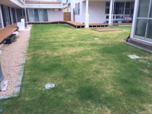 芝生の成長3